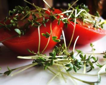 家庭菜園ってやっぱり難しそうという方も、ハーブやスプラウトを自家栽培から始めると良いでしょう。イタリアンパセリやバジルはそのままサラダにも使えますし、自家製の生のハーブはお料理をますます楽しくさせます。室内の観葉植物としての楽しみ方もできます。 最も簡単なのはカイワレ大根などスプラウト系野菜です。容器に水でよく湿らせたティッシュを敷いて種をまくだけ。ある程度育つまでは室内の陽が当たらない所で栽培して、10日くらいで収穫できてしまいます。ワイングラスや可愛い容器に入れて栽培すると、お洒落なインテリアグリーンになりますよ☆