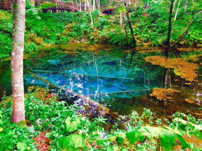 その水の透明度の高いこと!そして本当に美しい蒼なんです。底までくっきりと見ることができます。沈んだ倒木も腐らずにそのままでいられるのは、年間を通して水温が8℃と低いからなんですって。まるで化石のようです。