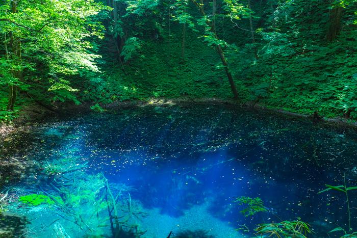 この青池には、年間数十万人もの観光客が訪れます。時間帯や天気によっても湖面の表情は変わります。光が差すと瑠璃色の池の美しさと、池に沈んだ枯れ木まで見える透明感に感動です。
