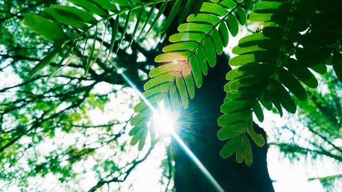 革は耐久性は高いけれど、熱には弱いため、直射日光に当てることは変色や知事見の原因となってしまいます。 革製品を風に当てる場合には直射日光は絶対に避けましょう。