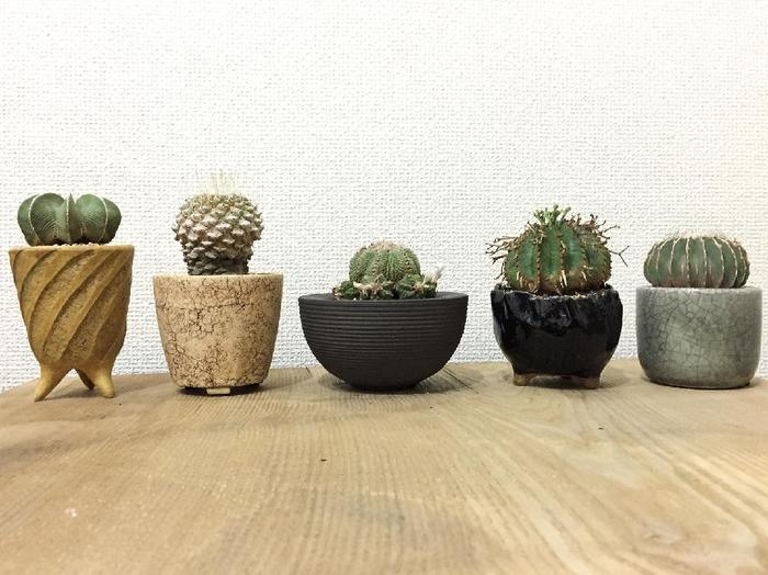 植木鉢にこだわった「小さな植物園」。見ているだけで心ウキウキしてくる、サボテンたちですね。