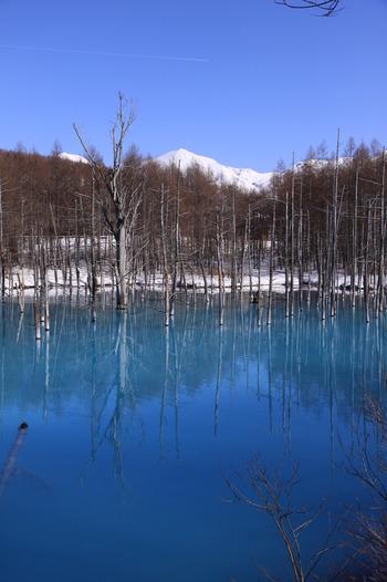 白金温泉では、温泉旅館はもちろんのこと、日帰り入浴ができる温泉施設も数多くあります。白樺林に囲まれた美しい景色が広がる露天風呂で、ゆっくりと体をあたためてみませんか。