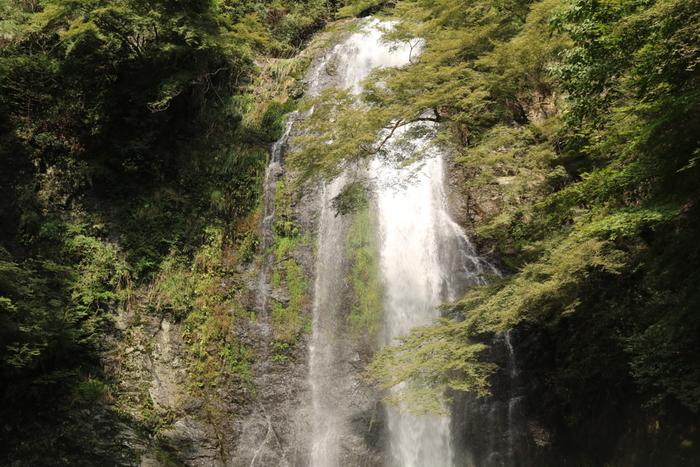 箕面公園の奥地にある箕面大滝は、箕面市中心部をとうとうと流れる箕面川を水系にもつ落差33メートルの滝です。古くは、修験道の道場であったと伝えられる箕面大滝は、日本の滝百選にも選定されている壮麗な滝です。