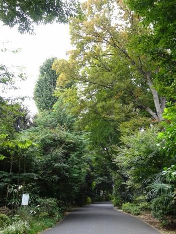東京の中心部ということを忘れてしまうような緑が広がっています。森の中の結婚式のようですね。
