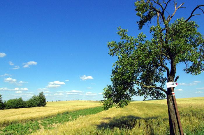 地平線が見えるほど広大な大草原に、指で数えられるほどの樹々が点在している風景は、この地を訪れる人々を魅了してやみません。