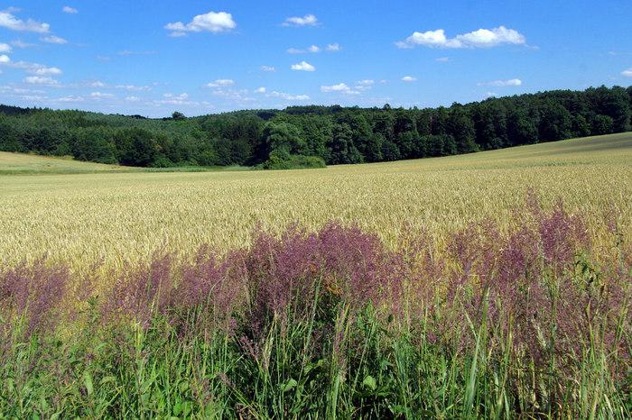 広大な麦畑では、風が吹くたびに麦の穂がざわざわと揺れます。心地よい葉摺れの音に耳を澄ませながら眺める雄大な景色は、言葉では表現できないほどの素晴らしさです。
