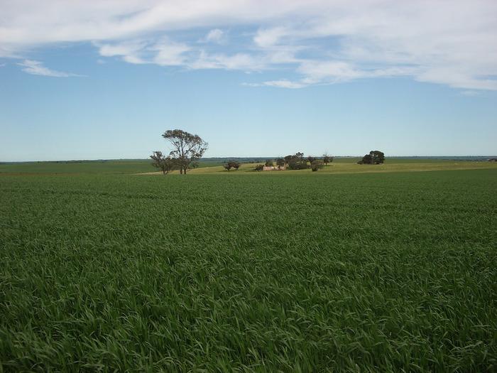 モラヴィア地方には、なだらかな丘陵地帯に広大な大草原が広がっています。