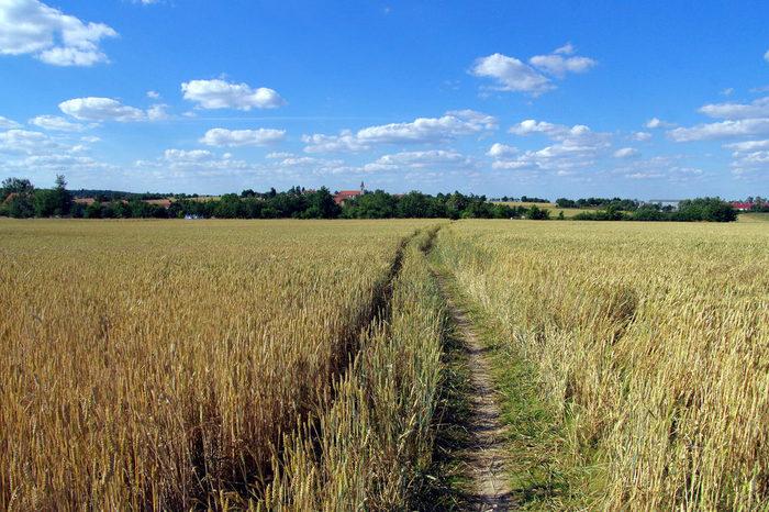 あぜ道が続く、広大な麦畑を眺めていると、まるで童話の世界に迷い込んだような気分を覚えます。
