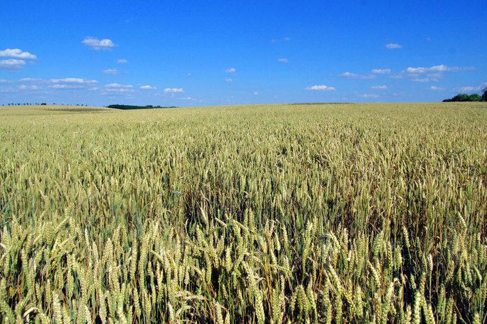 広大な丘陵地帯に広がる農地では、随所で地平線を見渡すことができます。