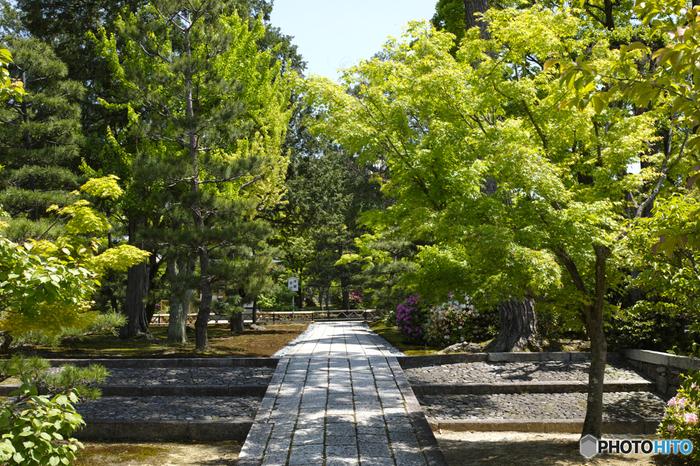 庭園も障壁画も見事ですが、豊かな自然に抱かれた「智積院」ならではの風情も大きな魅力です。境内は、入場無料ですので、ぜひ足を運びましょう。