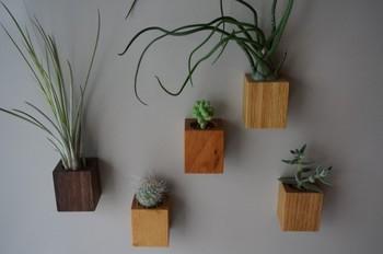 四角いウッドベースに植えられた多肉植物たち。チェリーやオーク、ウォールナットを使用した器です。裏面にマグネットが付いているので、冷蔵庫やホワイトボードなどにピッタリ付けて飾ってください。