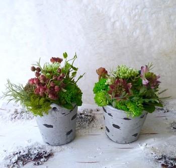 こちらは、陶器の器に植えられた多肉植物。お部屋の素敵なインテリアになりますね。プレゼントにもおすすめです。