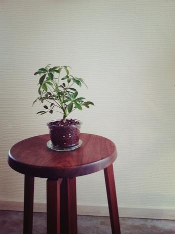 家に土を持ち込みたくない人の味方。ハイドロカルチャーで緑を育てよう