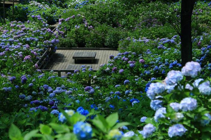 敷地面積約44haを誇る広大な園内には、紅葉園や椿園等の植物園の他、芝生広場や野外活動広場が配され、訪れれば豊かな緑や季節の花々を存分に楽しむことが出来ます。【画像は「アジサイ園」内の休憩所】