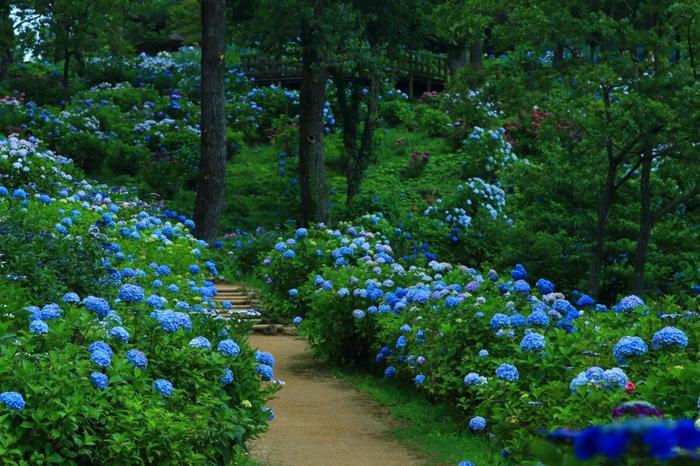 舞鶴市の北東、大浦半島にある「舞鶴自然文化園」は、椿と紫陽花の名所で知られる自然公園です。