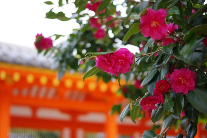 周辺には、国宝や重文指定の文化財を抱える名所も近く、京都駅からのアクセスも抜群です。  記事を参考にし、ぜひ東山七条へ足を運んでみましょう。あなたのまだ知らない日本文化の真髄に、きっと出会えるはずです。