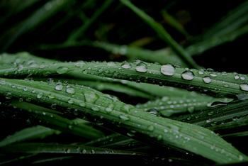 お水と混ぜて自然素材の虫除けスプレーを作るのもおすすめです。