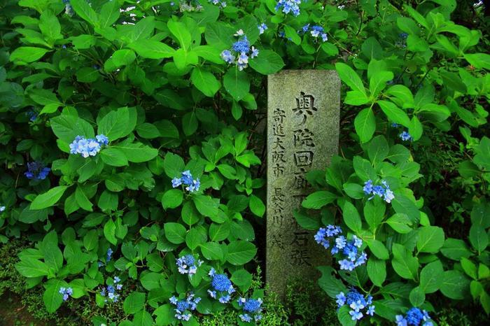 """緑豊かな参道は、梅雨時になると、参道脇の斜面に色とりどりの紫陽花が咲き乱れる""""あじさい回廊""""になります。"""