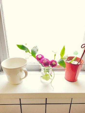 他の水耕栽培のお花と一緒に飾って、窓辺で育てることも楽しいですよ。