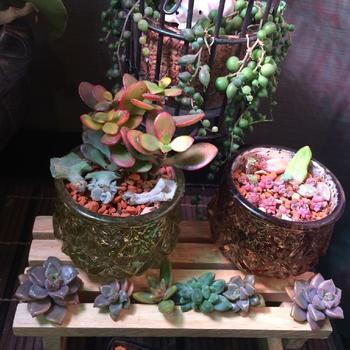 お気に入りのポットや陶器を使ってもOK。こちらは模様が美しいガラスポットを利用されています。