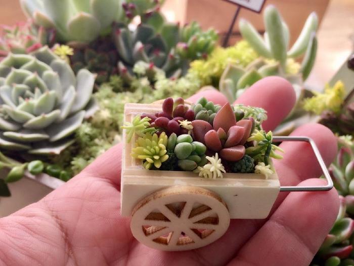 可愛らしい木箱の手押し車に多肉植物を寄せ植えしています。掌の中にあるミニチュアサイズの世界、素敵ですね。