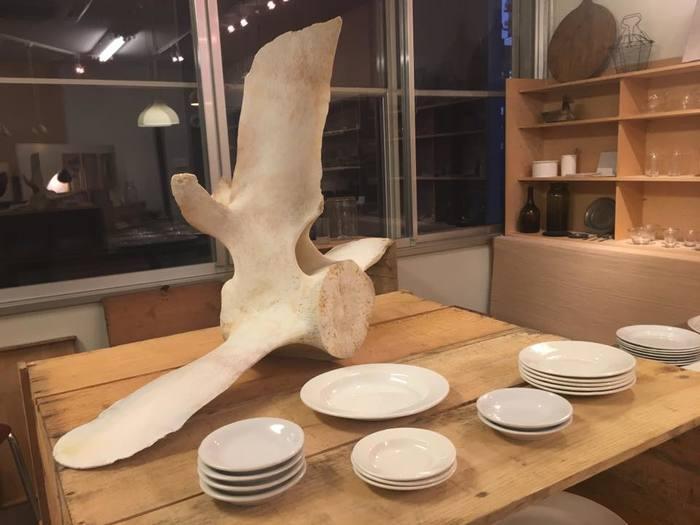 店内にさりげなく置かれているこのオブジェは、なんとクジラの骨! キリンの剥製ともあいまって、お店を不思議で素敵な空間に仕上げてくれています。
