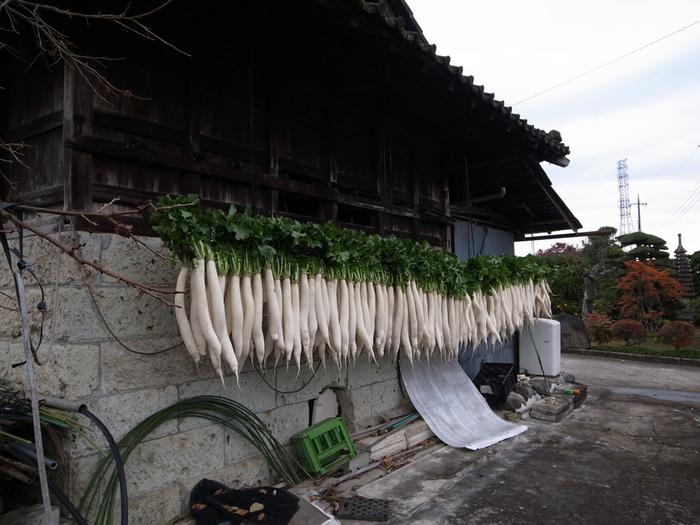この冬は是非とも、葉っぱのついたまるごとの大根を買ってみてくださいね。大根は捨てる箇所のない、便利な野菜。お台所の強い味方です。毎日のひと皿やおせちなどのお祝い料理にも大根を活用してみてください。