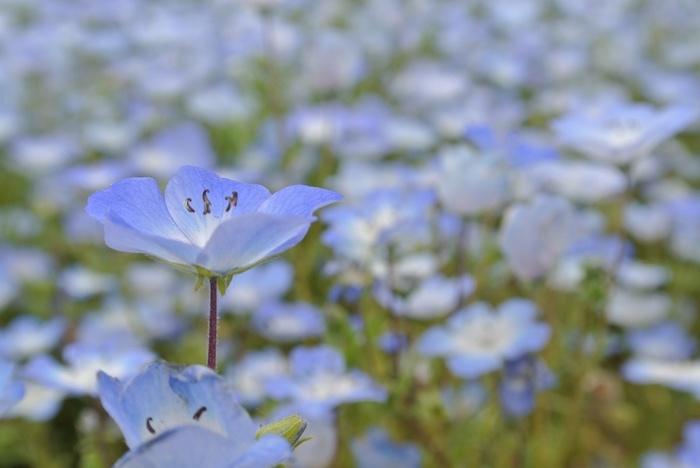 淡いブルーがとっても涼しげです。開放的な気分にしてくれそう。ストレスもどこかへ飛んでいってしまいそうですね。