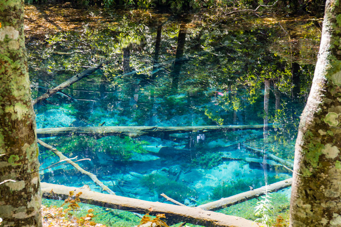 キラキラと青く輝く透き通った水面を持つ神の子池は、周囲220メートル、深さ5メートルの小さな池です。時間帯によって色を変えてゆく神秘的な水面はどこまでも透明で、池の底に沈んだ倒木がはっきりと見えるほどです。