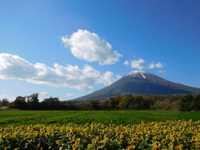 標高1898メートルを誇る羊蹄山は、その山容が富士山と似ていることから「蝦夷富士」と呼ばれています。
