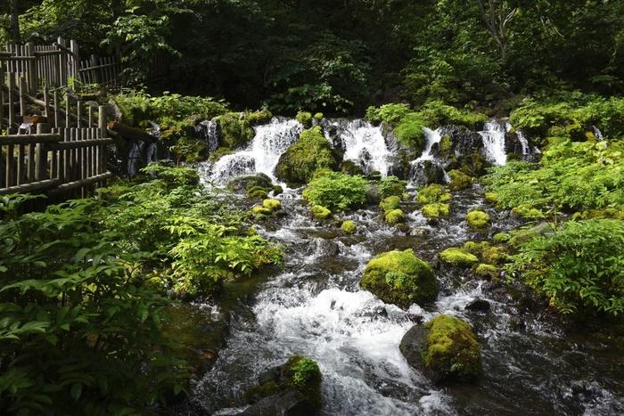 豊富な水量を誇る京極町の湧水は、「名水百選」のほか、「水の里百選」、「京極のふきだし湧水」として北海道遺産にも指定されています。