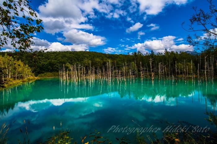 青い池とは、十勝岳麓の白金温泉街近くにある人造池のことです。青く煌めく水面が、立ち枯れとなった白樺やトウヒの白い樹肌を鏡のように映し出す青い池は人造物とは思えないほど神秘的な魅力を放っています。