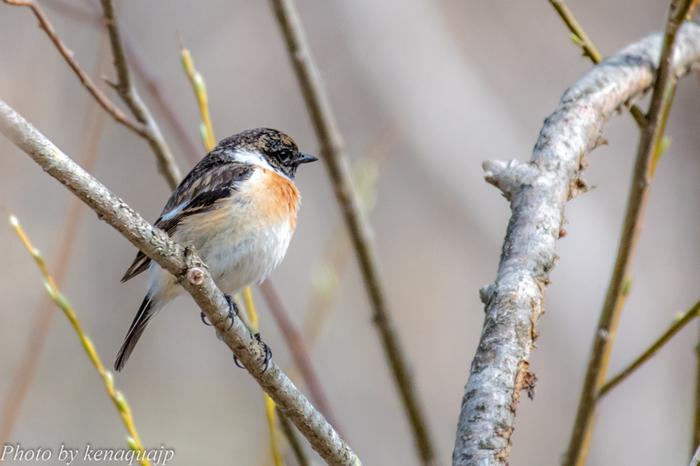 湿原そのものが天然記念物に指定されている釧路湿原は、野鳥などをはじめとする野生動物の宝庫です。