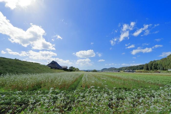 神戸市北区は、市内でも一番大きな区です。 天然のランドマーク・六甲山をひと山越えたところにあり、住宅街と農村地帯に分かれています。 海岸沿いの街とは違い、山の気候で緑深く癒される土地です。