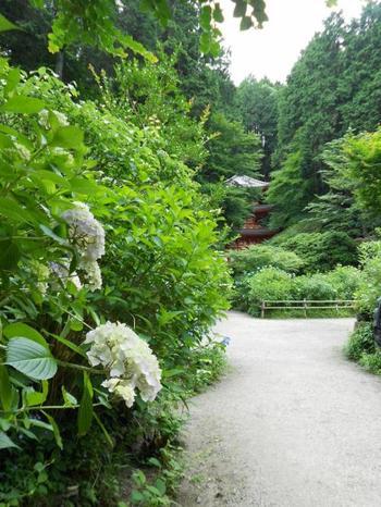 """「岩船寺(がんせんじ)」は、奈良都の県境の""""当尾の里""""に佇む古刹です。"""