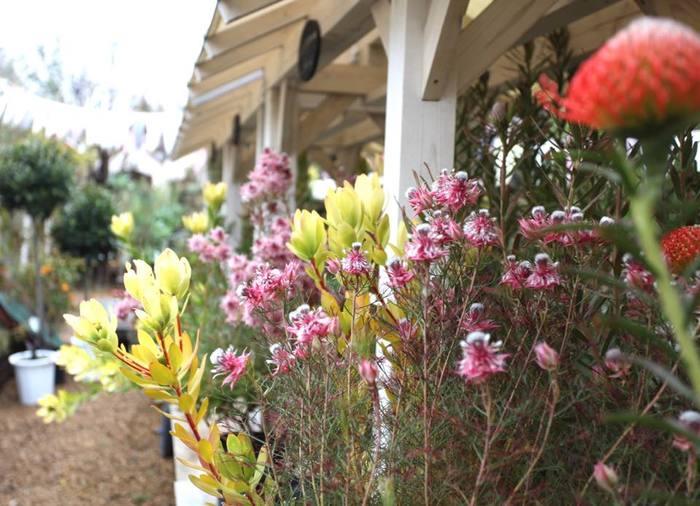 これからの季節は、特にソルソファームに行きたくなりますね。春の陽気とともに、ソルソファームにある花や草などの植物たちがさらに魅力をましていくよう。