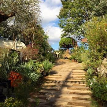 土日のみ営業しているソルソファーム。たくさんの素敵な植物を見るためには、歩きやすい靴を履いて行くのがオススメです。