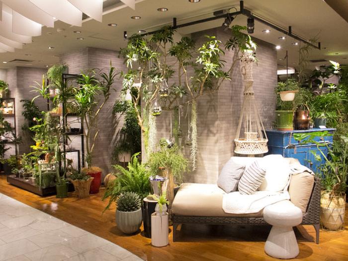 神奈川県の植物園「ソルソファーム」に行くのは、オープン日やアクセスの面で断念してしまっていた人も、都内にもソルソが手がけるボタニカルショップがあるんです。 二子玉川と新宿伊勢丹内にあるのは、「ソルソホーム」というお店。より暮らしに根ざしたグリーンを提案してくれます。