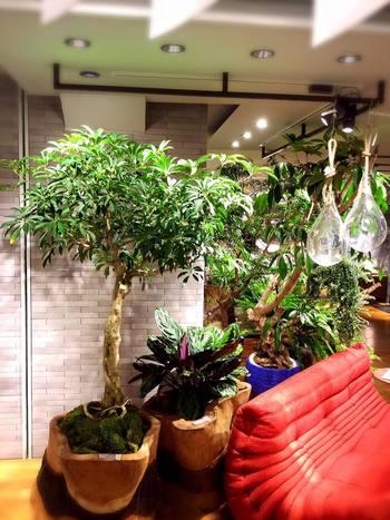 家具を使った、暮らしに寄り添うグリーンのディスプレイは、お家に帰った後の参考にもなりそうですね。 たくさんある植物の中から、宝探しのように自分だけのお気に入りを見つけてみてください。