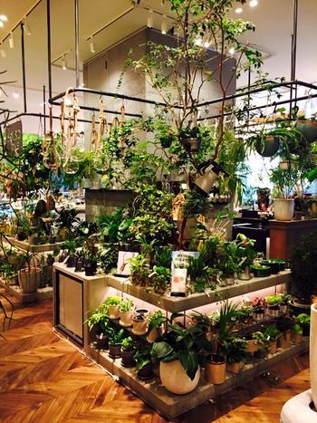 こちらは、二子玉川のお店の様子。話題の蔦谷家電内にあり、本屋さんとも共存するスペースがスタイリッシュな雰囲気です。
