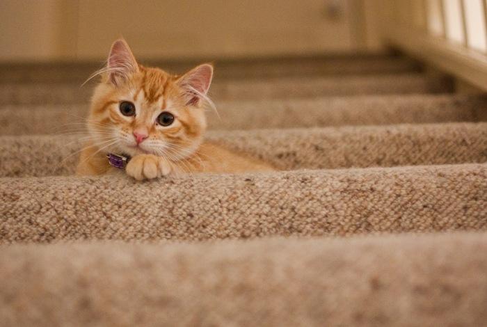 家族の大切な一員であるネコちゃん。かわいくておしゃれなネコグッズで、ネコちゃんとの大切なひとときを充実させてみませんか?