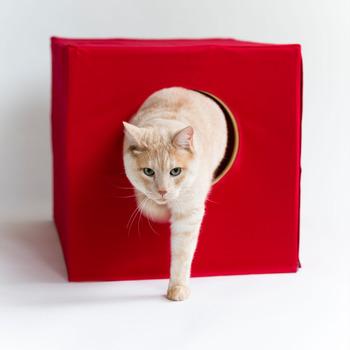 出入りもしやすくて、ネコちゃんも快適。カバーの色は6色から選べますよ。 毎日使う場所だからこだわりたい。プライベートな場所だから、トイレもおしゃれに使いたい。 そんなネコちゃんのためのトイレグッズです。