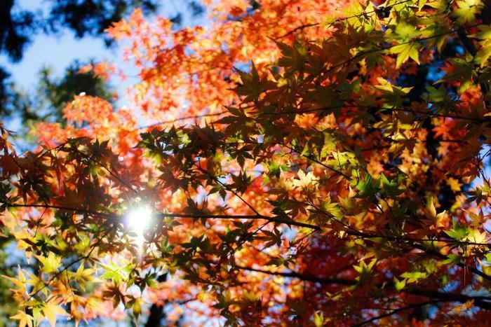 涼しい日も増えてきましたね。今年も暑い夏が終わり、楽しい行楽シーズンが近づいてきました。秋の暖かな日差しと少しひんやりとした風の中でピクニック♪なんて最高ですよね。