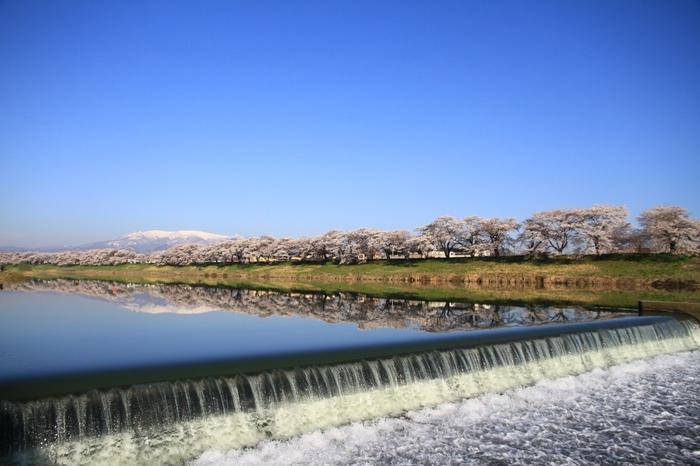 スキー場の雪が解け、樹氷と化した樹々が元の姿に戻る頃、蔵王に春が訪れます。蔵王連峰の山麓を流れる白石川は、鏡のように山容を映し出し、一目千本桜と冠雪した蔵王連峰が織りなす景色は、絵画のような素晴らしさです。