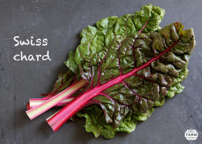 美しい葉野菜「スイスチャード」。カラフルなので料理の素材として加えると、華やかな出来栄えになりますね。味にくせもないのでどんな料理にも使えます。ぜひ、活用してみてはいかがでしょうか。