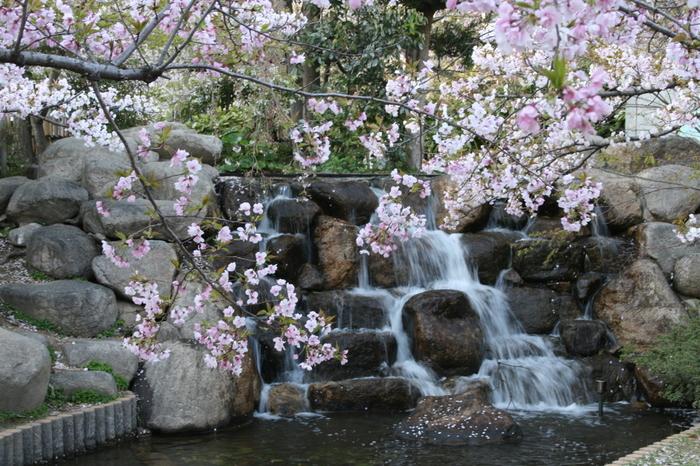 桜の季節に訪れたいのは、岡本駅から徒歩2分、水上勉の小説「櫻守」のモデル笹部新太郎の屋敷跡を整備した岡本南公園。 ササベザクラ、オオシマザクラなど10種類の桜約30本が植えられ、兵庫県内で10位の桜の人気スポットです。