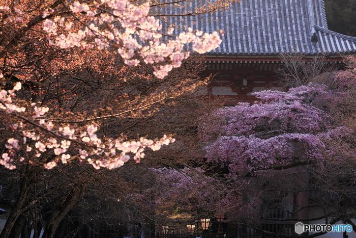 春にかけて、京都に行こうと計画している方も多いのではないでしょうか? せっかく京都にいらっしゃるなら、ぜひ京都らしい美しく美味しいものを食べていって下さいね。