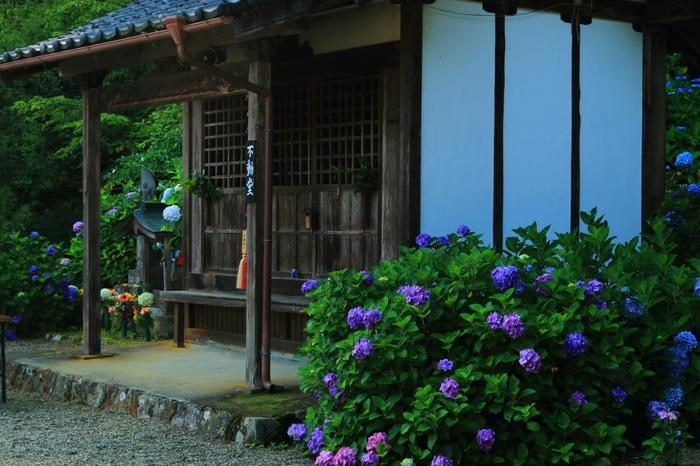 境内を周り歩けば、古刹ならではの、しっとりとした風情とともに、素晴らしい花景色を楽しめます。