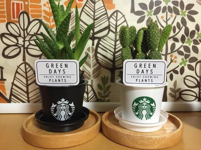 スタバプリンの容器は、プラスティック製で程よい大きさをしています。韓国では食べ終えたカップを鉢植えとして活用することが流行していましたが、日本でも鉢植え代わりに利用する人が増えています。
