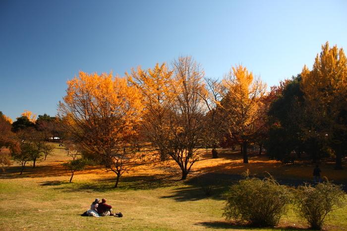 天気が良い秋の行楽日和に、ブランケットを広げてピクニック。友達や家族とワイワイするもよし。恋人と一緒にまったりするのも楽しいですよね。